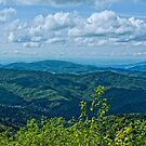 Appalachian Summer by Sue Justice