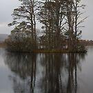 Loch Mallachie Pines in the rain by Annie Haycock