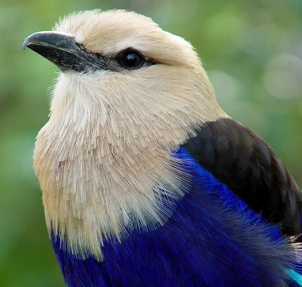 Pretty Boy Blue by Guatemwc