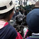 Dog, Ecuador by J Forsyth