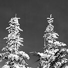 Two Pines in Black and White by North22Gallery