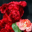 Valentine Teddy by Bev Pascoe