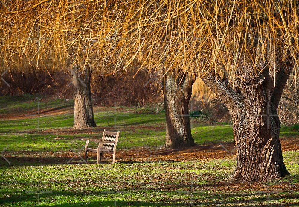 Winter Willow by Geoff Carpenter