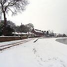 Snowy Shore by Tom Gomez
