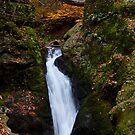 Autumn Falls by Karol Livote