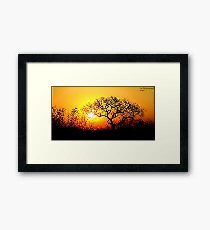 Kruger Park Sunset Framed Print