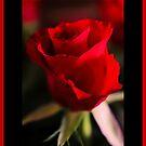 To my Valentine by JEZ22