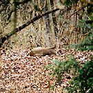 DEER AT REST by Fred Moskey