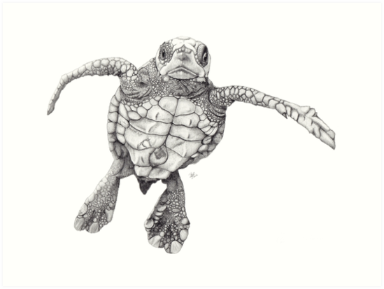 Chelonioidea by Beth Thompson