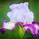 Painted Iris by Anita Pollak