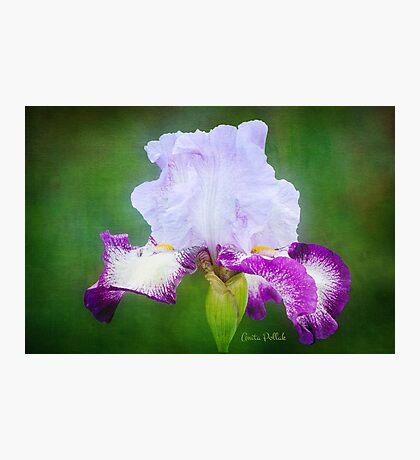 Painted Iris Photographic Print