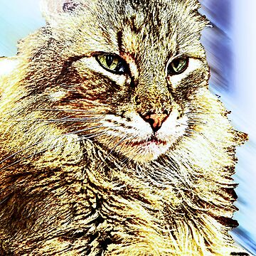 Maine Coon by DanceswithCats