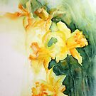 Daffodils in Spring by Kay Clark