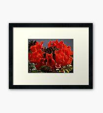Tropical Beauty - Belleza Tropical Framed Print