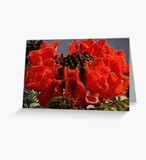 Tropical Beauty - Belleza Tropical Greeting Card