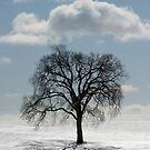 Backlit Tree  by Daniel  Parent