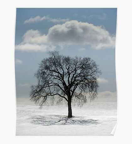 Backlit Tree  Poster