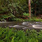 Manning River, Barrinton Tops by Richard  Windeyer