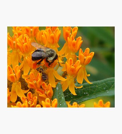 Working Bee-side One Another Photographic Print