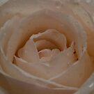 Petals by vasu