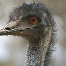 Up Close And Personal by Derek Kan