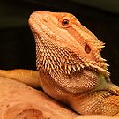 Bearded Dragon by leunig
