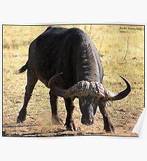 Unhappy Buffalo Poster