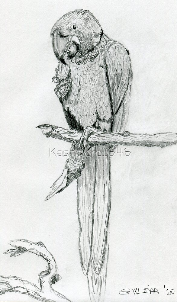 The Parrot by Kashmere1646