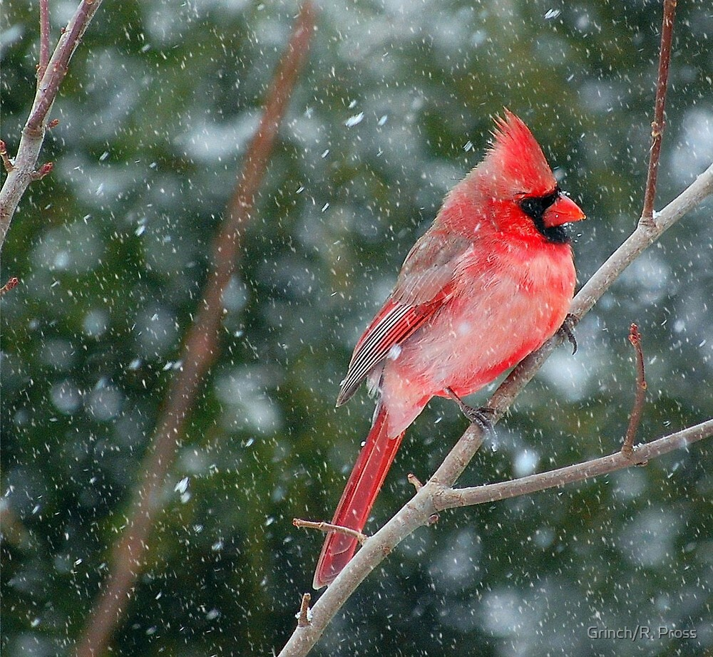 Too Snowy to Fly by Grinch/R. Pross