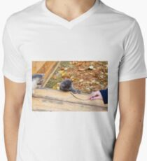 Two pretty little kitten played with a stick in the autumn park Men's V-Neck T-Shirt