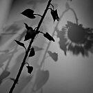 Sunflower by SarahMistake