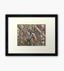 A Cute Squirrel Framed Print