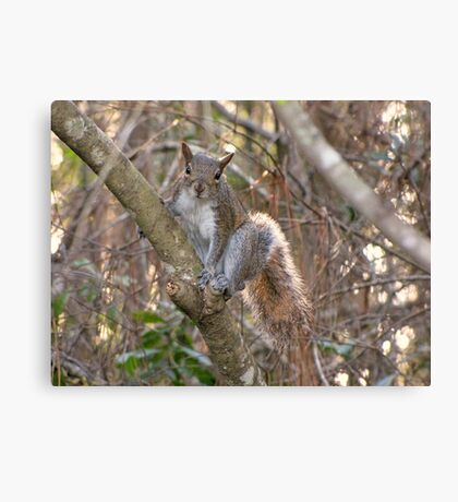 A Cute Squirrel Canvas Print