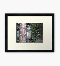 Sweet Squirrel Framed Print