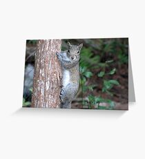 Sweet Squirrel Greeting Card