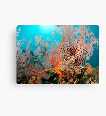 Lionfish on a coral bommie, Papua New Guinea Canvas Print