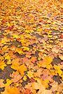 Leaves by Svetlana Sewell