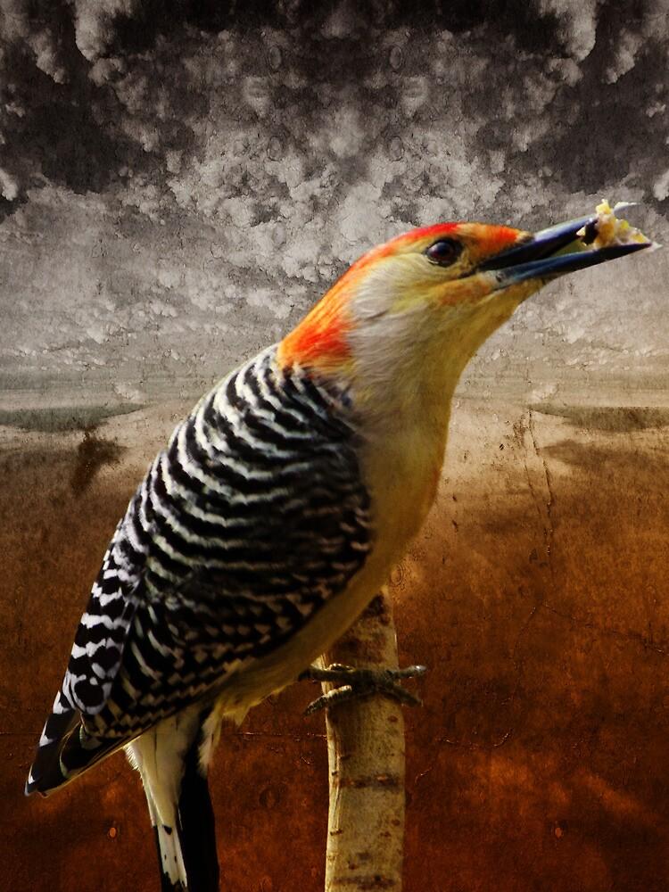 Keep pecking Away by Pamela Phelps