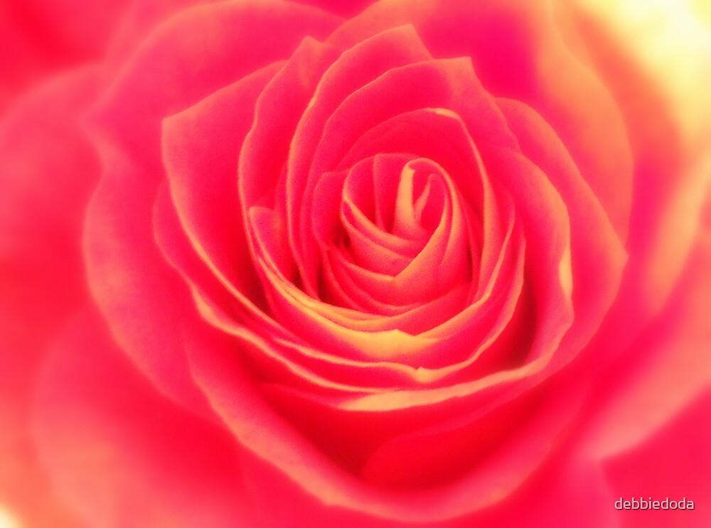 Pink Rose by debbiedoda