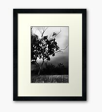 SOMBRE Framed Print