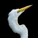 Great White Egret On Alert by Joe Jennelle