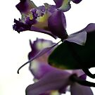 Purple Orchid by Robin Black