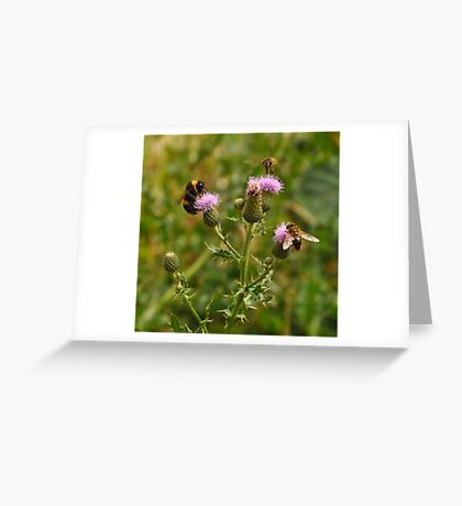 Coming in to land ~ Greeting Card