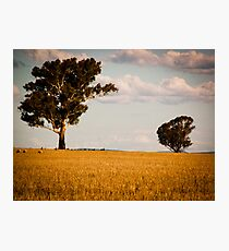 Parkes Countryside Photographic Print