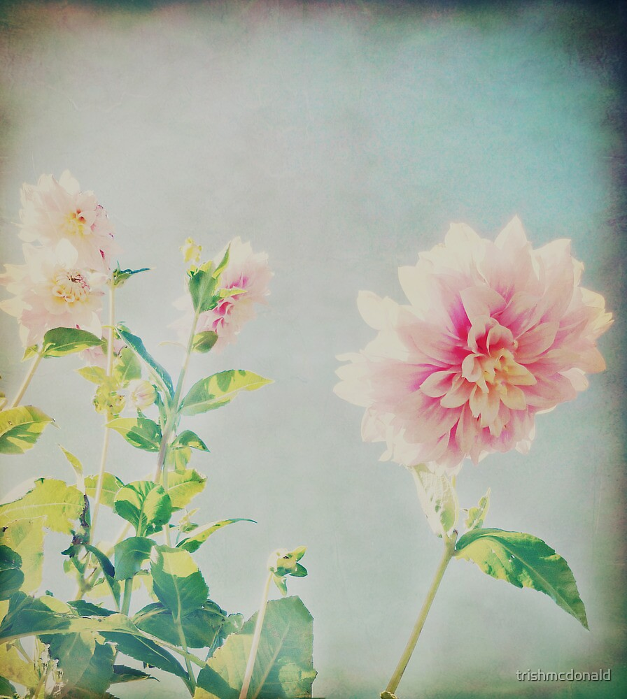 Vintage Flower by trishmcdonald