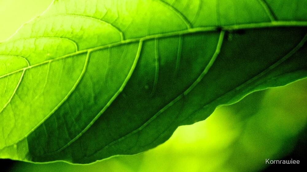 I, Green. Got Featured Work by Kornrawiee