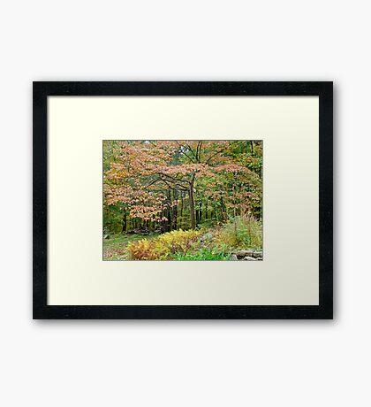 Autumn Paints a Dogwood and Ferns Framed Print