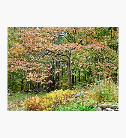 Autumn Paints a Dogwood and Ferns Photographic Print