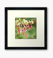 Fairy Things - Fuchsia Flowers Framed Print