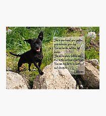 Black Chihuahua dog. Photographic Print